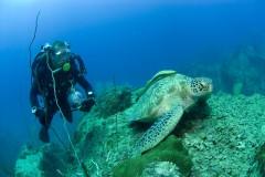 Turtle conservation on Ko Tao