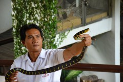 Queen Saovabha Snake Farm