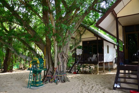 Moonhut: Relax by the banyan tree.