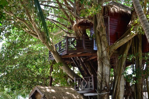 Now that is a treehouse.