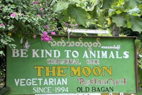 Be kind to animals by dining at Moon.