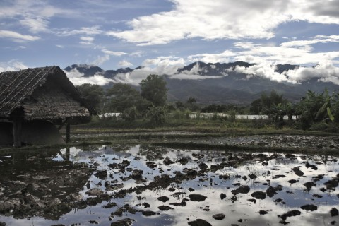 Ricefield views in the Pai valley.