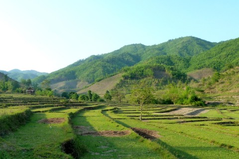 Pretty rice field valleys. Photo taken in or around Tha Ton, Thailand by Mark Ord.