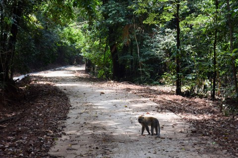 Ko Tarutao's jungle is home to plenty of wildlife. Photo taken in or around Ko Tarutao, Thailand by David Luekens.