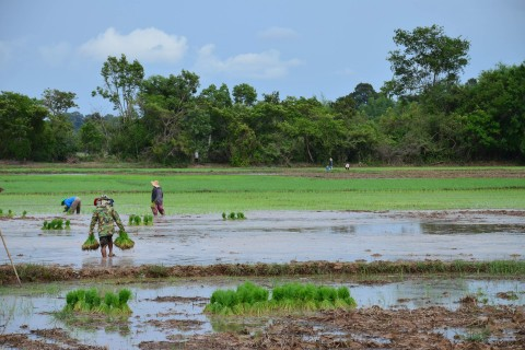 Putting the countryside to work. Photo taken in or around Ubon Ratchathani, Thailand by David Luekens.