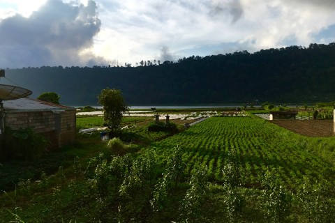 Strawberry fields forever. Or at least, in Bedugul.