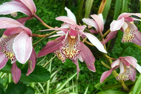 Bedugul's climate is perfect for orchids -- see them at the gardens or markets.