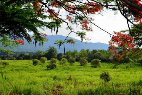 Some of the scenery in the Khao Yai agricultural region. Photo taken in or around Khao Yai National Park, Thailand by David Luekens.