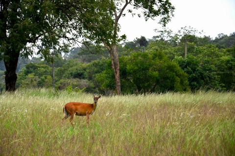 With a little luck, you might see wildlife sauntering through the Khao Yai grassland.