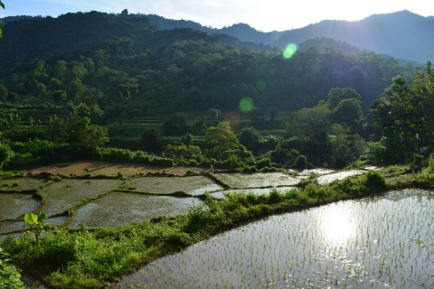 Just another rice field valley… Photo taken in or around Merente, Indonesia by Stuart McDonald.