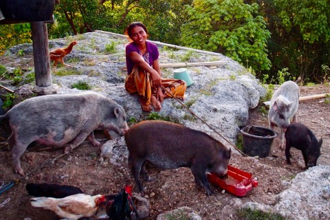 Yes. Bacon. Well, pork at least. Photo taken in or around Sumba, Indonesia by Sally Arnold.