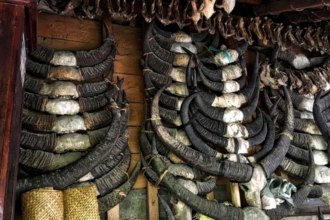 A horn or two at Waitabar village
