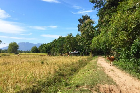 Just bucolic. Photo taken in or around Don Daeng, Champasak, Laos by Cindy Fan.