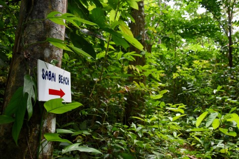 Follow the signs. Photo taken in or around Jungle trekking on Ko Muk, Ko Muk, Thailand by David Luekens.