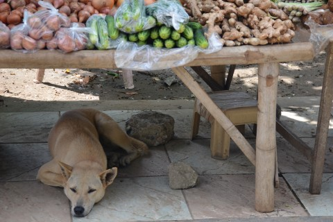 Markets are not for everyone. Photo taken in or around Three days in Pai, Pai, Thailand by Mark Ord.