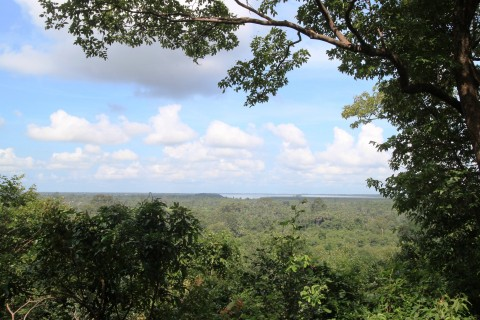 Jungle views. Photo taken in or around Bakheng, Angkor, Cambodia by Caroline Major.