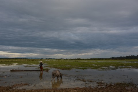 Busy day on the wetlands. Photo taken in or around Activities in Ban Khiet Ngong, Ban Khiet Ngong, Laos by Cindy Fan.