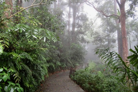 Misty woods. Photo taken in or around Penang Hill, Penang, Malaysia by Sally Arnold.