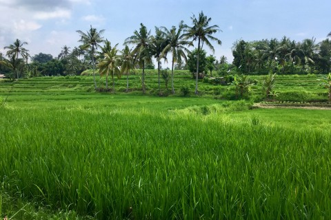 A lovely walk in. Photo taken in or around Yeh Pulu, Ubud, Indonesia by Sally Arnold.