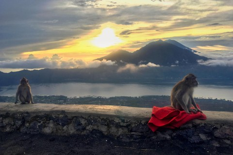 Even the monkeys enjoy the view. Photo taken in or around Climbing Gunung Batur, Gunung Batur, Indonesia by Sally Arnold.