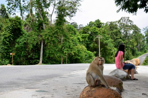 No monkeying around when you pick a good tour company. Photo taken in or around Khao Yai tours, Khao Yai National Park, Thailand by David Luekens.