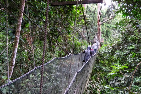 The canopy walk takes you high through the forest. Photo taken in or around Poring Hot Springs, Kinabalu Park, Malaysia by Sally Arnold.