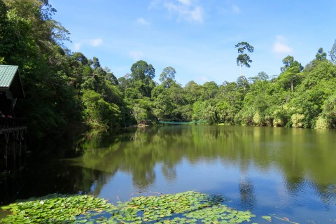 You can hire a paddle boat to splash across the lake, or just enjoy the serenity. Photo taken in or around Rainforest Discovery Centre , Sandakan, Malaysia by Sally Arnold.