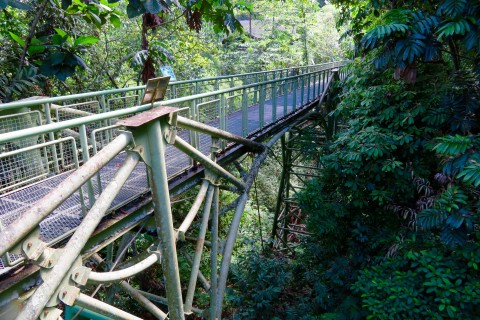 The canopy walk is really something. Photo taken in or around Rainforest Discovery Centre , Sandakan, Malaysia by Sally Arnold.