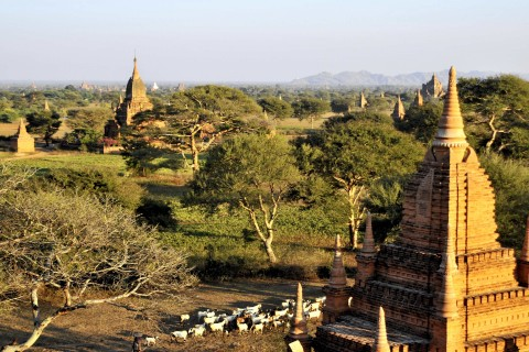 View from Shwe San Daw to the northeast. Photo taken in or around Central Plains of Bagan, Bagan, Burma_myanmar by Mark Ord.