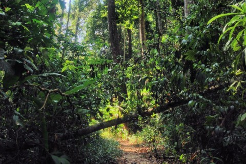Jungle trail. Photo taken in or around Trekking on the Perhentians, Perhentian Islands, Malaysia by Stuart McDonald.